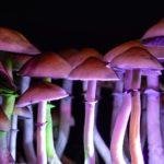 A referendum on Magic Mushroom use