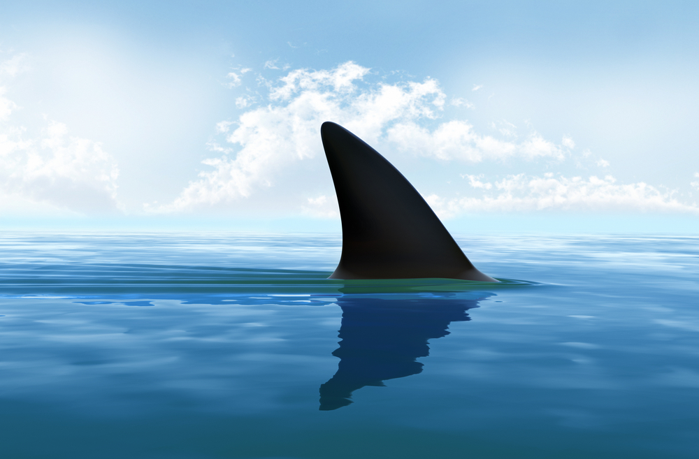 Canada bans the import and export of shark fins
