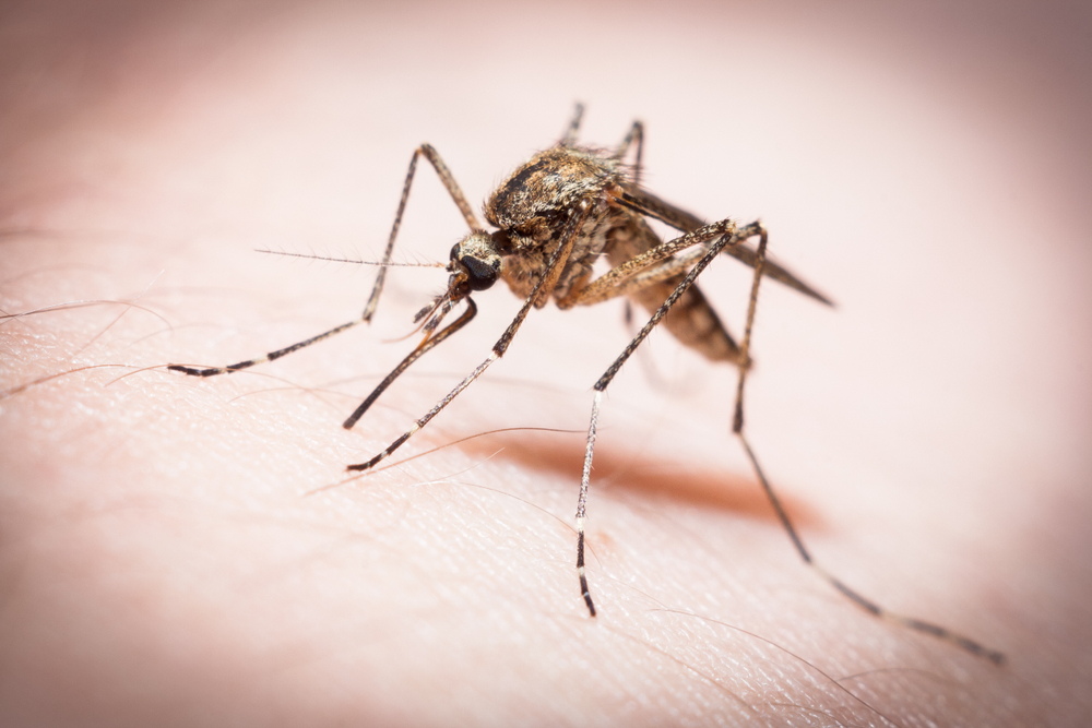 Malaria has affected approximately half of the population of Burundi this year