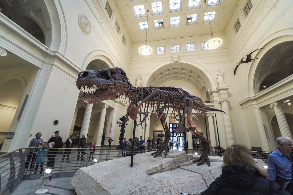 President and CEO of Field Museum announces his retirement in 2020