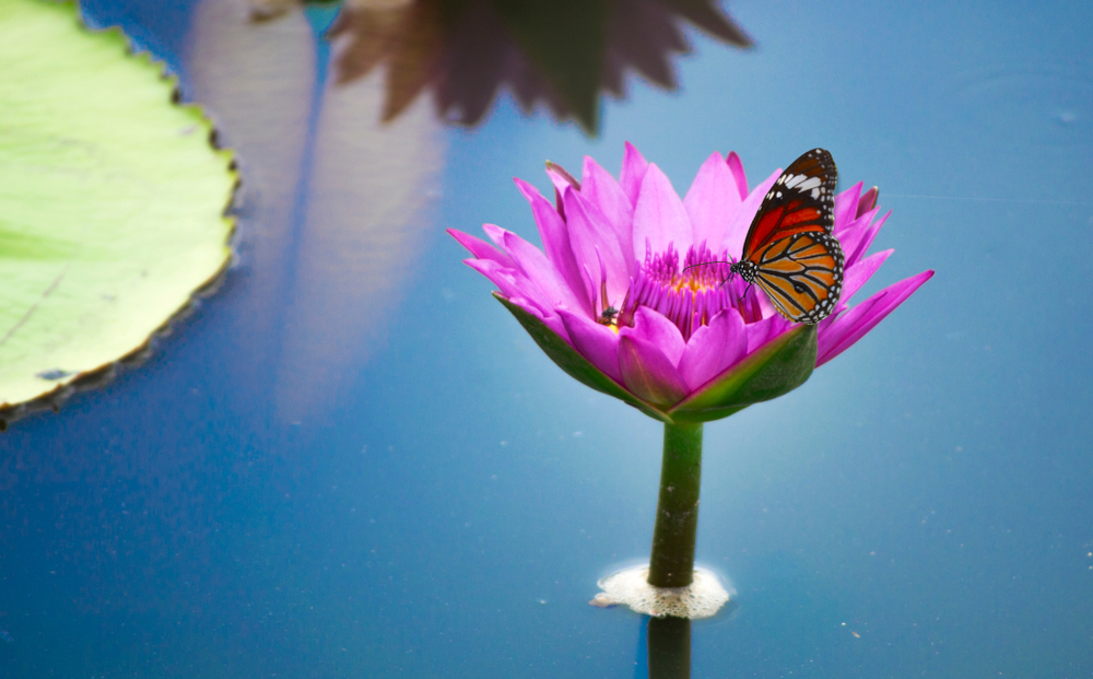 Butterfly Garden at the Santori Public Library of Aurora's garden: A Scout's Project