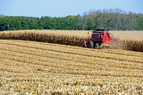Taiwan signs a deal to buy Illinois corn and soybean of