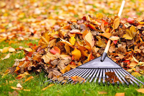 City of Naperville's bulk curbside leaf collection begins on Monday