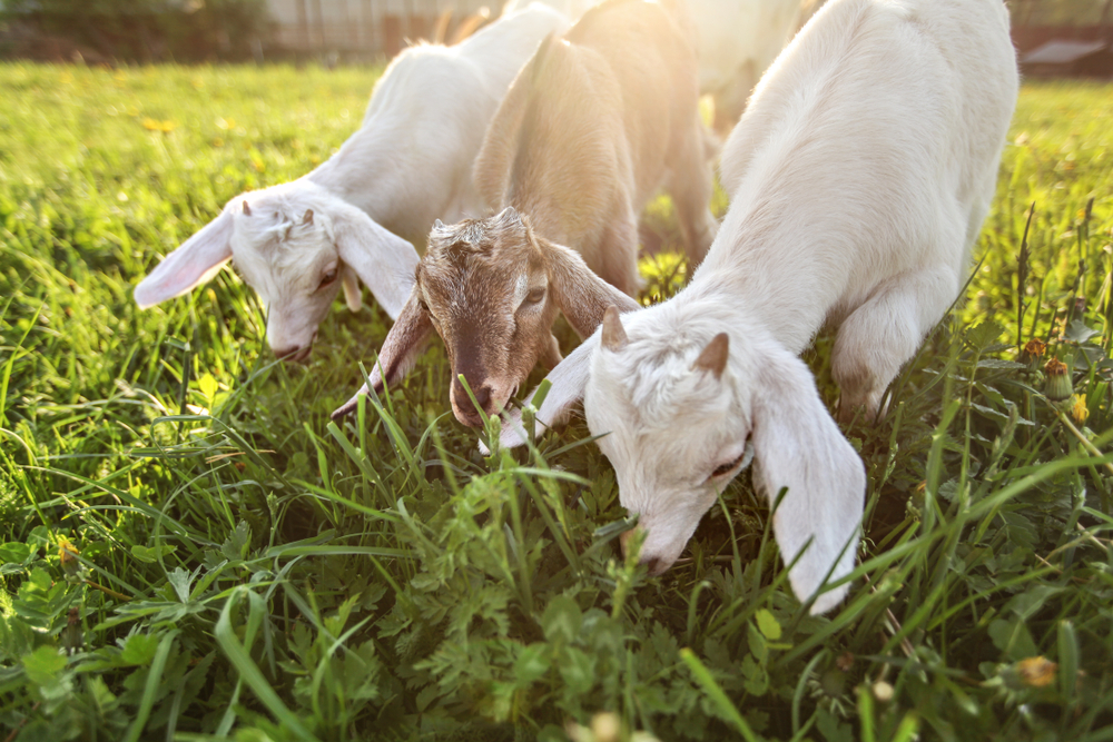 Ordinance places strict regulations on farms in Chicago