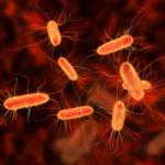 US Center for Disease Control and Prevention investigates E. Coli outbreak in 8 States