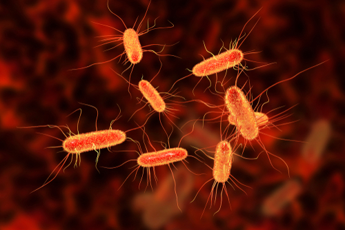 US Center for Disease Control and Prevention investigates E. Coli outbreak in 8 States