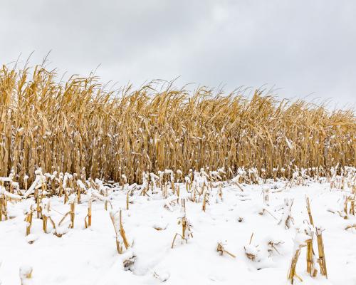 Illinois Farm Bureau president demands free trade