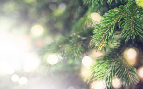 Allergic reactions link with Christmas tree reported