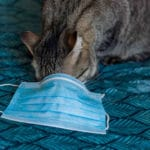 Pet cat tested positive for coronavirus in UK