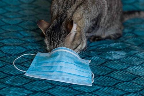 Pet cat tested positive for coronavirus in UK