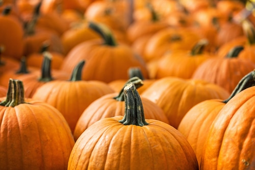 Pumpkin Composting Event to happen in Elgin on November 7